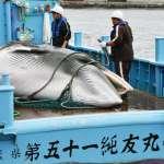 日本拿反恐法對付護鯨環團:考慮動用自衛隊保護捕鯨船