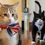 英國首相官邸與外交部之爭!「首相貓」捕鼠政績大輸「外交貓」,打架也輸、還縱鼠歸巢…