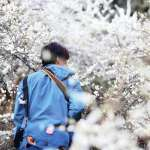 避開人潮爆滿的熱點!人氣旅遊部落客公開賞梅祕境,藏身南投信義鄉的私家梅園