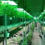 搶進娛樂用大麻市場 美國7華人賄賂警察、私種大麻