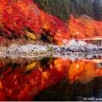 台灣直飛名古屋!日本愛知、岐阜10處絕景,能量景點、賞楓名所、世界遺產通通有
