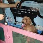 毛小孩專屬!這個公園設置全台第一座自助洗狗機 24小時「隨時洗」