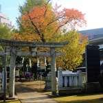 把自己交給真正的大自然:《東京森林咖啡店》選摘