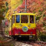那麼美的橘色楓林,秋天更該去一遍!東京近郊這7處隱藏版景點,個個是內行人首選