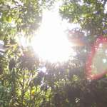 高溫假有望!氣象局「高溫訊息」月中上路 溫度達36度亮黃燈,連續3天亮橙燈