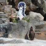 跨越次元的愛?癡望動漫人物立牌的日本企鵝 「葡萄君」病逝