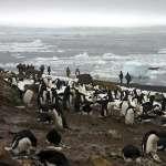 數千隻雛鳥只剩兩隻存活!大量海冰導致南極企鵝族群滅絕
