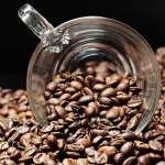 全世界最貴咖啡豆是「它」!咖啡界的夢幻傳奇香港限量開賣,只怕你有錢也喝不到!
