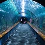 趁你放鬆看魚,偷偷監控你!水族隧道藏80顆鏡頭,這詭異設施竟是杜拜機場安檢新招…