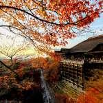 內行人很少公開的京都賞楓秘境!距離清水寺幾步、人卻少大半,資深玩家教你這樣走