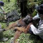 人類是地球殺手,海陸空無一倖免!WWF報告:野生動物40年減少6成,我們是挽救生態災難的最後機會