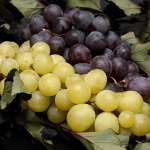 葡萄品種這麼多,到底哪種最健康?營養師分析各項優點:原來想減肥要吃這種顏色