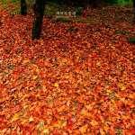賞楓不必飛京都!阿里山就能看日本楓樹,絕美楓紅景點內行人低調推薦「這所小學」