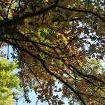 秋冬山林之美 東勢林場樹木變色換彩衣