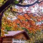 台北出發不用一小時,就能欣賞最美「楓」景!全台5處紅葉秘境,一點都不輸國外啊