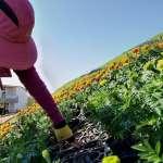 什麼是「花開的聲音」?台中國際花毯節12/23登場,巨型花卉動態音樂盒亮眼