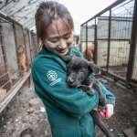 「愛我不要吃我!」7成南韓人不再吃狗肉 養殖場、狗肉店紛紛倒閉