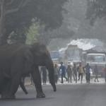就是講不聽!民眾戲弄大象玩自拍 遭攻擊踩死案例激增