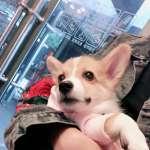 中國版鄉民的正義》愛犬走失遭人狠心摔死 網友肉搜兇手家潑漆威脅「滾出社區」