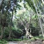 日本的天堂秘境就在這!千年神木、療癒溫泉、漫天螢火蟲,下次去九州可別錯過啦!