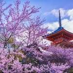 2018日本賞櫻指南》1張圖告訴你今年日本櫻花開花時間、必去景點,千萬別白跑一趟