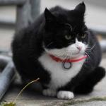 貓奴餵朕錯了嗎?!英國外交部「捕鼠官」工作效率低落 高層下達禁餵令
