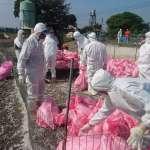 禽流感疫情延燒 雲林今預防性撲殺2646隻鴨