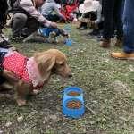 有「狗」讚!屏東熱博寵物競賽即將開跑