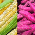 條碼8開頭、甜玉米、紫地瓜全是基改?食藥署闢謠:錯!若是基改食品會「這樣標」!