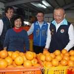支持在地農業 苗栗營養午餐業者認購萬斤優質桶柑