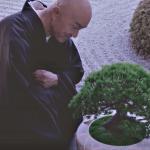 有片》日本寺院竟出現超智慧「盆栽師父」?渴了會找水、還能跟僧侶談人生,太令人驚奇!
