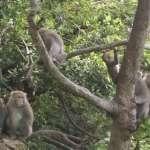 高雄接觸或餵食獼猴 即日起查證後可立即開罰最高1萬