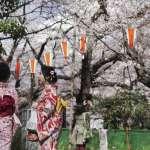 圖輯》「春城無處不飛花,寒食東風御柳斜」 中日絕美櫻花盡收眼底
