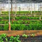 想到中國發展有機農業,現在就是最好的時機!只要掌握這5大觀念,創業絕對不是夢