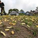 「清明節要消失了」!內政部譴責殯葬業廣告扭曲環保自然葬