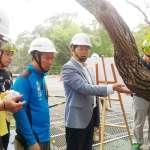 國際樹醫首次健診「森林裡的花博」 肯定中市府護樹政策