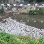 好毒!敬鵬工廠廢水入溪 近14噸魚暴斃