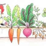 【看插畫學英語】聽過「有機農場」,但你看過「有雞農場」嗎?矽谷最新的養雞潮流