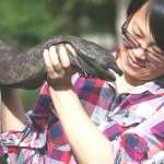 這種「活化石」快被中國人吃光了!科學家:保育政策錯誤讓娃娃魚快絕種