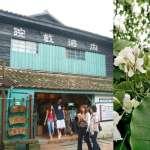 到新竹除了賞油桐花,客家小吃也不容錯過!盤點內灣老街5大美食,沒吃到真是白來了