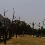 觀點投書:修剪路樹的聯想