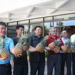 助在地果農 台東縣府認購6公噸鳳梨
