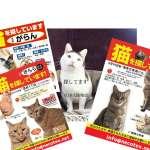 被強震嚇到奪窗而出!日本關西傳出多起「貓咪逃家」災情