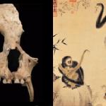 秦始皇祖母的墓葬,出土科學家從沒見過的「長臂猿」!揭露中國千年前的物種絕滅事件…