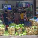 菜價防跌!農委會今啟動高麗菜種植登記 保障每公斤至少6元收購