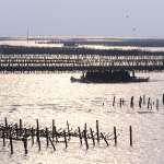 嘉縣浮筏式蚵棚 將導入法制化及科學化管理