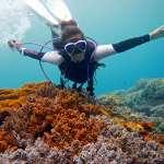 炎炎夏日,只在海邊戲水太不過癮了!潛水教練:考個潛水執照,深入海洋吧