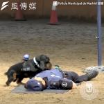 【影音】史上最強警犬!西班牙神犬展現CPR絕活,認真模樣萌翻百萬網友啦!