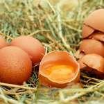 蛋荒難解 農委會:先調庫存蛋,將進口140萬顆補缺口