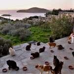 太扯了!希臘釋出「貓奴夢幻職缺」,顧貓咪免費住愛琴海別墅,每天看海、賞貓還有錢拿!